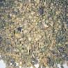 بذر اسفناج