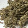 Stachys lavandulifolia