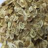 Persian hogweed