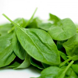 Seeds of spinach