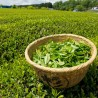چای سبز غوره